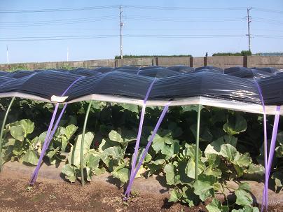 農業のトータルコーディネータ  イノウエ農商事のブログ-07043