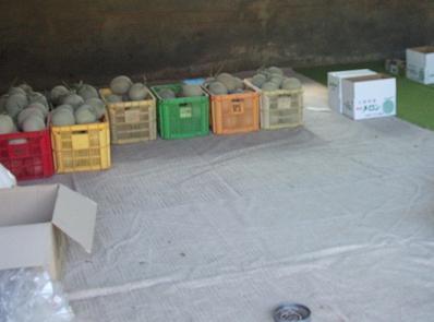 農業のトータルコーディネータ  イノウエ農商事のブログ-07045