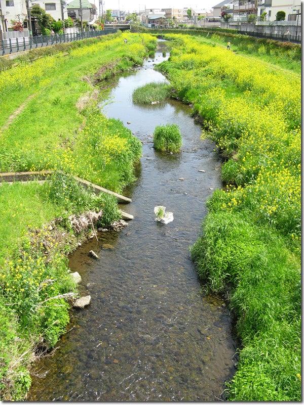 FREEDOM-春の野川は