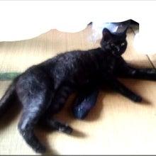 天使が教えてくれたこと。【黒猫ラムネ・迷子捜索中】-迷子猫・高瀬町