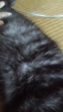 天使が教えてくれたこと。【黒猫ラムネ・迷子捜索中】-迷い猫さんの柄