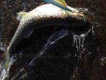 魚のともだち-KIMG0034.JPG