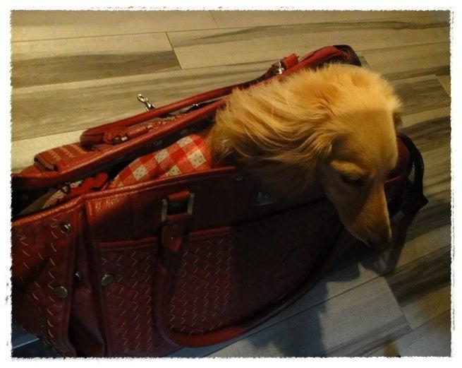 旅犬Lani&Leaのほほん風船記-FOLON