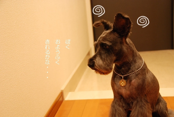 BAU!! DOG DRESS Serviceのブログ