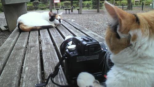 おもろいこと大好きぃぃ((((´゚゚∀゚゚`))))ノ♪-猫写真の多くは、こうして撮られている!?