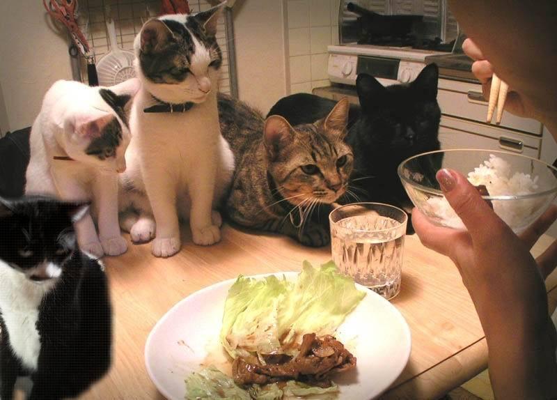 おもろいこと大好きぃぃ((((´゚゚∀゚゚`))))ノ♪-激しくプレッシャーのかかる食卓