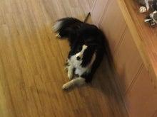 うさぎの音楽談議-看板犬「クレア」です