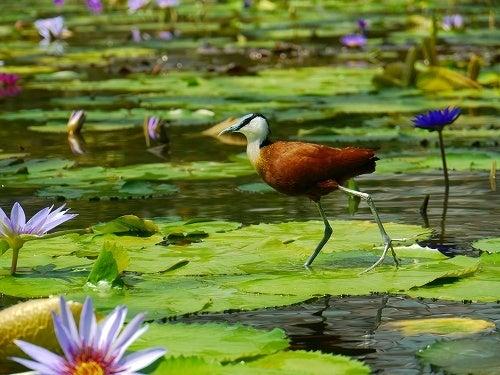 フクロウ,インコ,ペンギンと遊ぶ掛川花鳥園ブログ 鳥達の飼育日記
