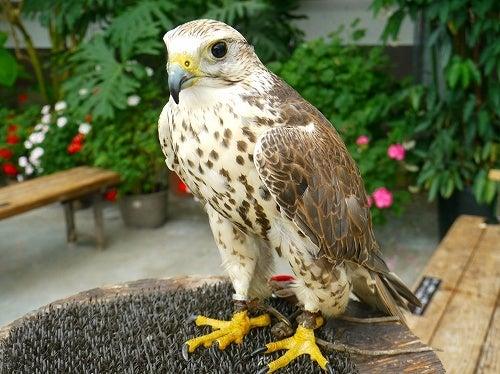 $フクロウ,インコ,ペンギンと遊ぶ掛川花鳥園ブログ 鳥達の飼育日記