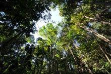 NGOグリーンハート