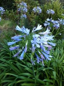 $心の羅針盤~ティム・マクリーンと高岡よし子によるブログ-青い花