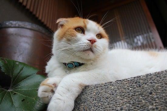 そこまるブログ 養老孟司先生と猫の営業部長