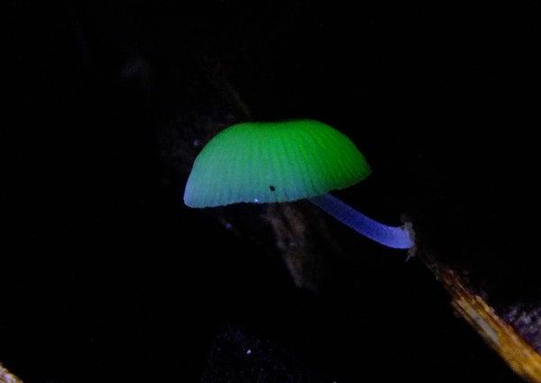 オーシャン&フィールドガイド ブルーレース   小笠原の写真日記
