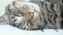 しまミーコの「猫の世話」と「本作り」