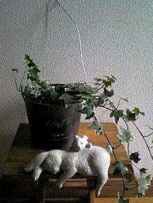 milkusausaさんのブログ-120720_1428~01.JPG