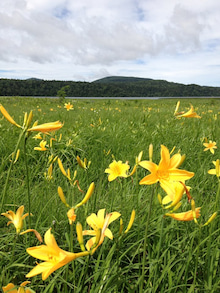 世界の大自然に咲き誇るフラワーエッセンス達が内面から美しく輝く『最愛のあなた』へと開花するまでをお手伝いします