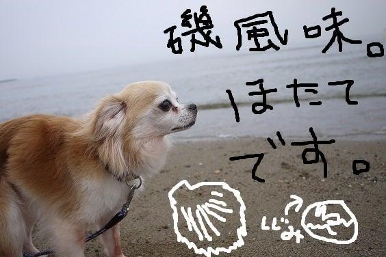 $犬の里親募集~はぴねすDOG~ 関西・大阪で幸せを待つ犬達の記録です。
