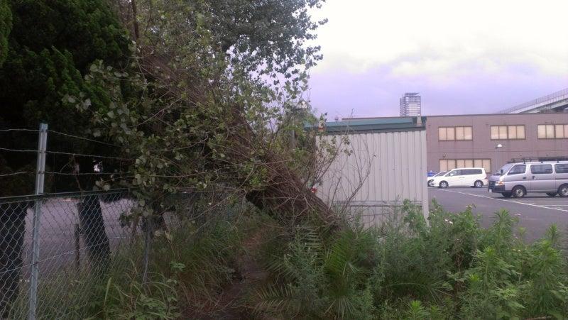 宮本善高 [建築なんでも相談室]のブログ-北九州市小倉北区 駐車場 大木倒れる 倒木 風倒木