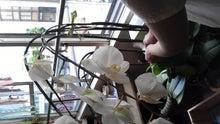 cafena.のブログ-NCM_0386.JPG