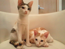 PFL★MIKIのブログ-2012072200050000.jpg