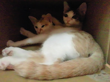 PFL★MIKIのブログ-2012072022550001.jpg