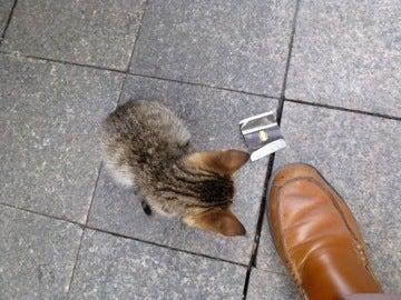 猫とクツ1