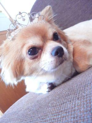 犬の里親募集~はぴねすDOG~ 関西・大阪で幸せを待つ犬達の記録です。