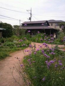 花咲く*やわらぎびと-2012072415320000.jpg