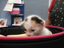 タブチ動物病院 (埼玉 川越 動物病院) のブログ