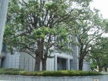 あゆ好き2号のあゆバカ日記-大阪市役所