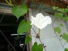 $奄美大島の田畑絹織物です。
