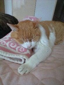 ずれずれブログ…湘南で猫と暮らせば…-120726_1259~0001.jpg