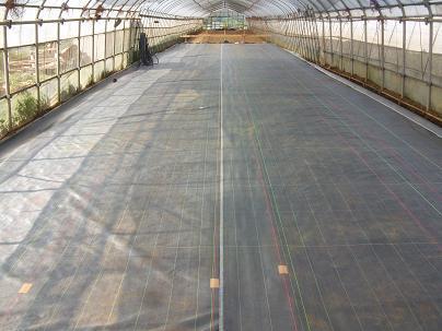 農業のトータルコーディネータ  イノウエ農商事のブログ-07263