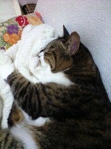 ずれずれブログ…湘南で猫と暮らせば…-120726_2042~0001.jpg