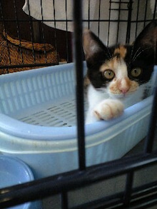 ずれずれブログ…湘南で猫と暮らせば…-120727_1210~0001.jpg