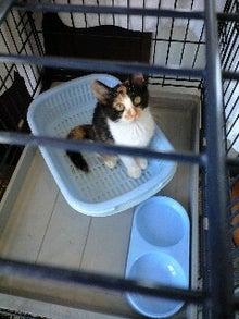 ずれずれブログ…湘南で猫と暮らせば…-120727_1155~0001.jpg