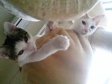 PFL★MIKIのブログ-2012072514450000.jpg