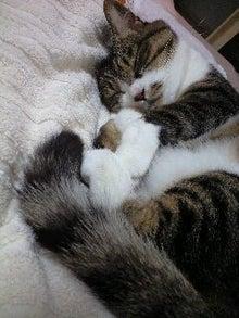 ずれずれブログ…湘南で猫と暮らせば…-120729_2205~0001.jpg