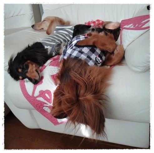 旅犬Lani&Leaのほほん風船記-リフレッシュ エッセンシャル リゾート