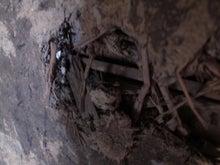 京町家を買って改修する男のblog-朽ちかべ