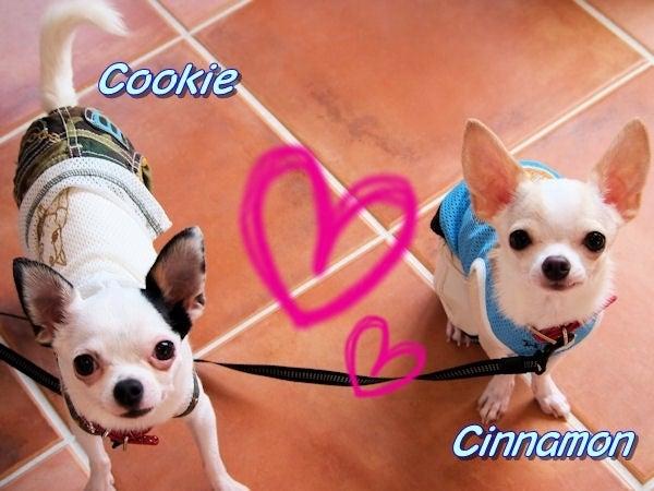 クッキー&シナモン