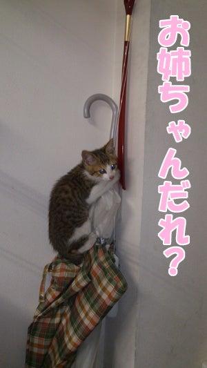 """""""タンタン""""と""""ユキ"""""""