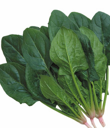家庭菜園を応援する農業おやじのブログ~家庭菜園・園芸用野菜の種のことなら市川種苗店
