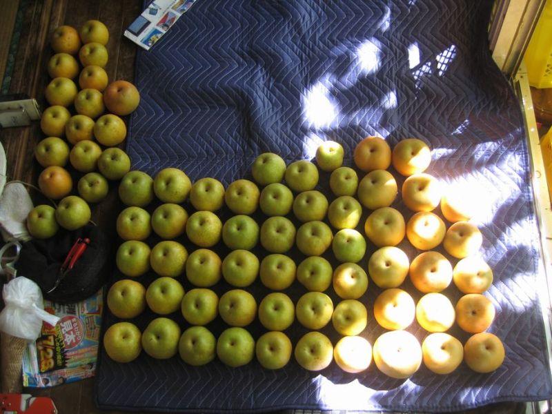 $大岱の果樹園 東世園のブログ