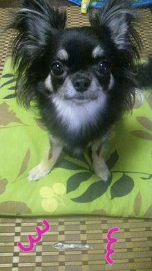 *。*。*。らむブロ*。*。*。~☆Happy Chihuahua Life☆~-2012080516330000.jpg