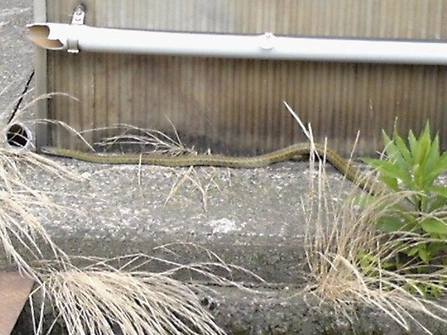 【ミニカー】朝倉くみこ日本一臭【地震歓喜乞食】111kg YouTube動画>1本 ->画像>231枚