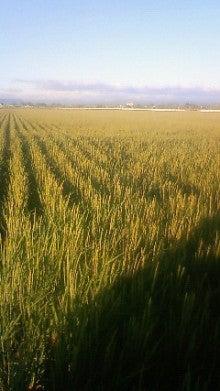 農業ビトNAOKAZUの日記-201208071759002.jpg