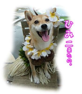 犬っちのブログ-ひみこ