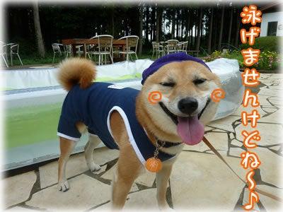 犬っちのブログ-泳げない