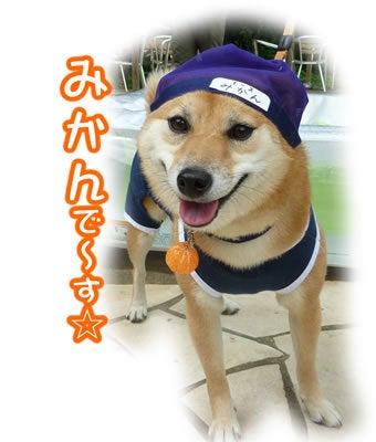 犬っちのブログ-みかん